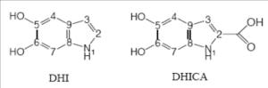 diidrossiindolo