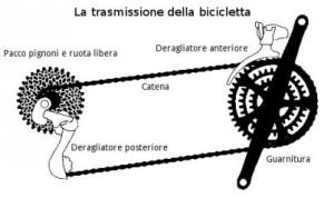 rapporti-trasmissione